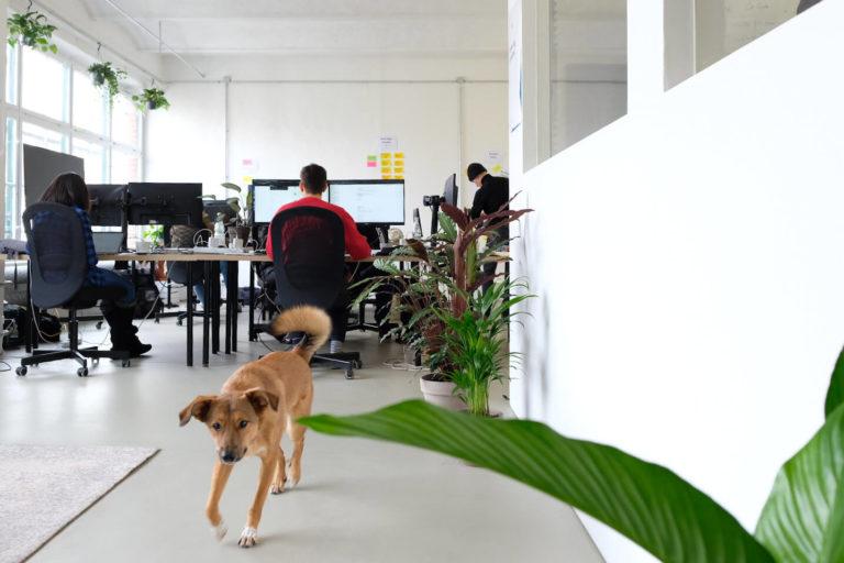 Plantclub möchte Arbeitsplätze durch Pflanzen produktiver und gesünder machen